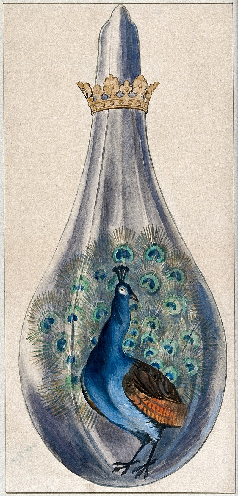 A peacock in a crowned alchemical flask; representing the stage in the alchemical process when the substance breaks out into many colours.